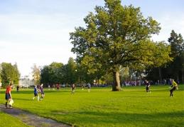 POP: Estai didžiuojasi galingu ąžuolu vidury futbolo aikštės (FOTO)