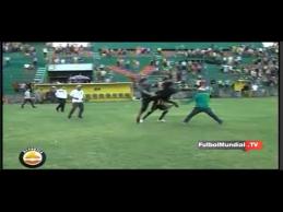 Per rungtynes Hondūre - žaidėjo spyris sirgaliui į galvą